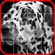Picross Album - Nonogram by Nodis