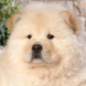 cute pet wallpapers by best wallpaper inc