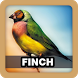 Finch Bird Singing Sound by Juns Project