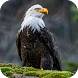 Eagle Wallpapers by Dabster Software
