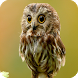 Owl HD Live Wallpaper Animals by FunGames10