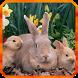 Rabbit Live Wallpaper by 3D Top Live Wallpaper