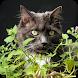 beneficios de la Catnip by fredshrodEnt