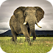 Elephant Wallpapers by Dabster Software Solution