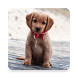 Puppy Backgrounds by AlVl.Dev