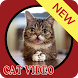 cat video collection by Media Centre