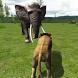 Real Lion Simulator 3D by iPlay Studio