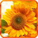 Sunflower Live Wallpapers by 3D Top Live Wallpaper