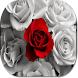 Rose Flower HD Wallpapers by HD Wallpaper Developers