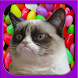 2048 Grumpy Cat version by Jaxon