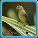Canto de Coleiro offline by Yayane Apps