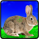 Rabbit Hunting Challenge by Extra Play 9Studio