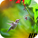 Colored bird, Live Wallpaper by WpStar