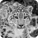Snow Leopard Live Wallpaper by LegendLive
