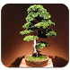 Collection Of Bonsai Plants by GusMedia