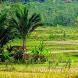 Aas Rolani Tarling Cirebonan Terpopuler by Raffa_Studio