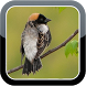 Bobolink Bird Sounds HQ by The Best App Inc