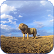 Lions Video Live Wallpaper by LuckyEdit