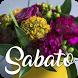 Felice Sabato by V.S.J studio