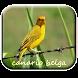 Canario Belga by M Zakia Randi 354 Apps