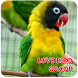 Terapi Lovebird Gacor by Boboiboy upin Ipin Sopo jarwo Desainer