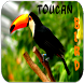 Funny Birds Singing by Apps Free Inc.
