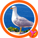 Seagull Sounds by Free Sounds Effects