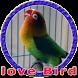Masteran Lovebird Durasi Panjang MP3