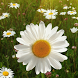 sunny day live wallpaper by best wallpaper inc