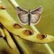Diseases of Soybean by TRI GUNAWAN