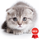 Kitten Wallpapers by Hit Mobile
