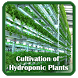 Hydroponic Cultivation by TMF Labs
