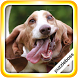 Jigsaw Puzzles: Dogs by PuzzleBoss Inc