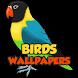 Birds Wallpapers HD by Joojle