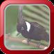 Masteran Burung Cililin by Afnan Dev