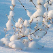 wallpaper winter live by Pretty and cute wallpapers llc