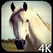 Horse 4K Video Live Wallpaper by Hubert Apps