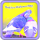 Birds Live Wallpaper FREE by Munwar Apps