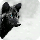 Black Wolf Wallpaper by GoldenWallpapers