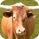 Bull: Angry Attack Simulator by kis apps