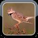 Calandra Bird Sounds HQ by The Best App Inc