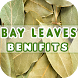 Bay Leaves Benefits by Health Info