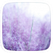 Purple Lavender Theme by Heartful Theme