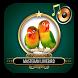 Masteran Lovebird by DiamondSix