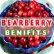 Bearberry Benefits by Health Info