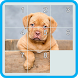 Slide Puzzle - Dog by RoofTopSoft