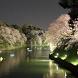 東京 千鳥ヶ淵 (Tokyo Tidorigafuti)