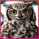 Owl Wallpaper by Andrian G