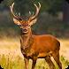 Deer Hunting Season 3D 2017 by Kool Games
