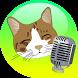 translator talking cat by Games&AppsRMB